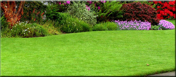 Alliston and New Tecumseth Lawn Care and Property Maintenance